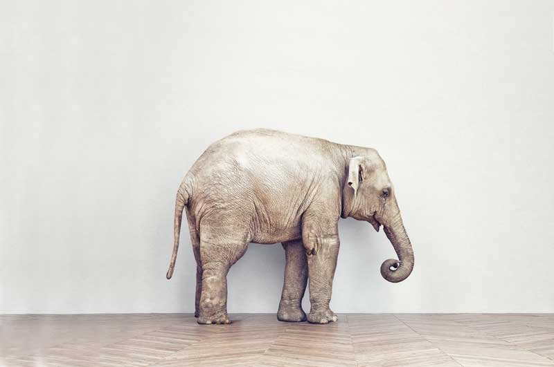 The Elephant In The Room Just Between Us