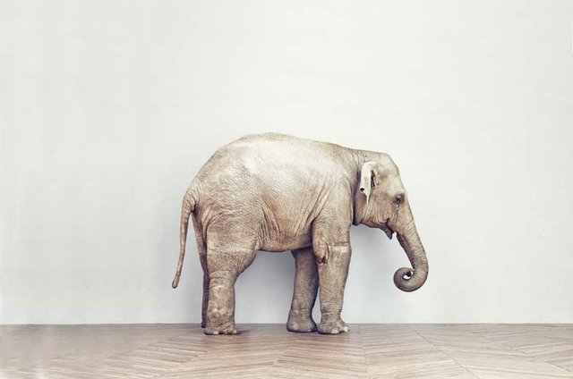 The Elephant in the Room - Just Between Us