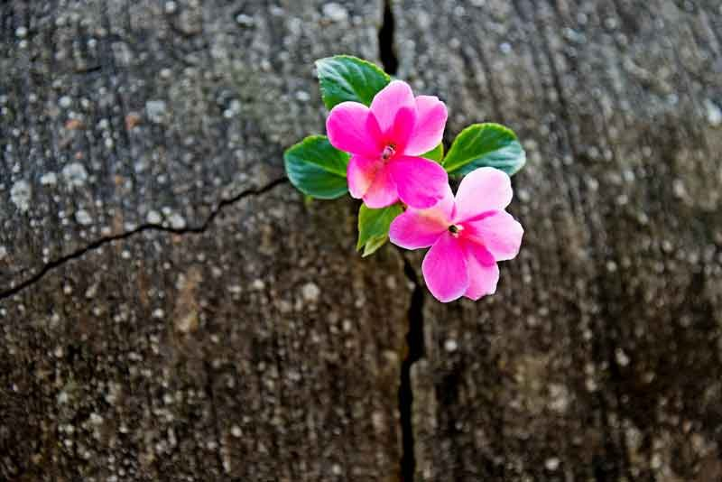 Christian Devotions on Finding Hope