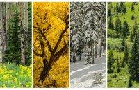 Life Has It's Seasons | Christian Devotions