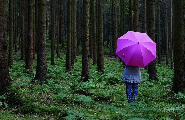 Whispers in the Woods | God is with You