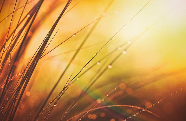 Dew from Heaven | Hope in Turbulent Times
