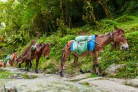 The Mule | A Missionary Rescue Story