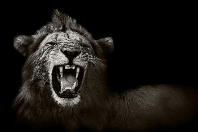 Our Enemy the Lion