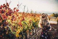 We Are God's Vineyard